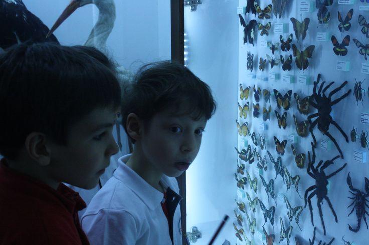 Anabilim Doğa Müzesi'nde