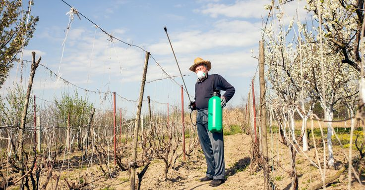 Here's Why Your Organic Wine Is Actually Really Bad For The Environment