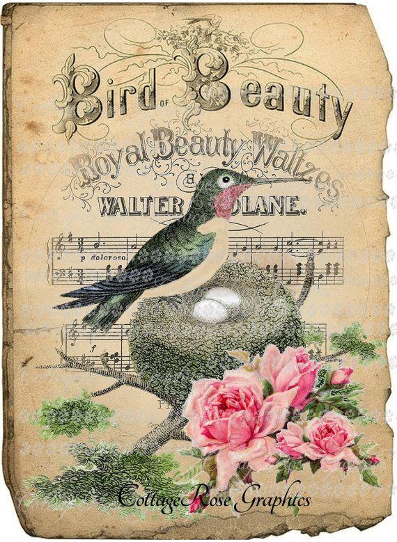 Large digital download Hummingbird Bird Beauty pink roses single image BUY 3 get one FREE ecs Prinatable