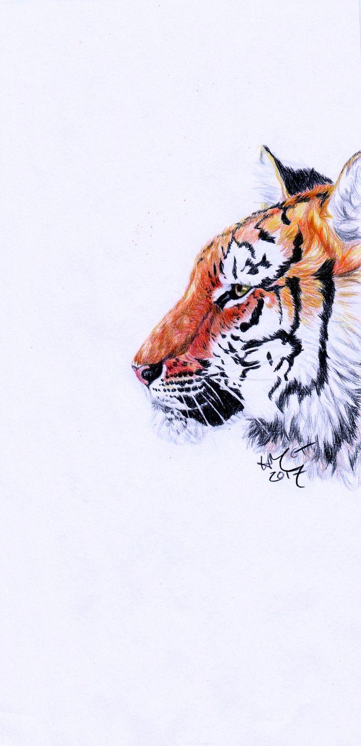 """Tiger Stare"" 2017. @itscheesetoasties on Instagram"