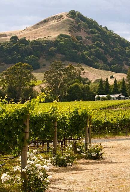 Napa Valley Vineyards,  California