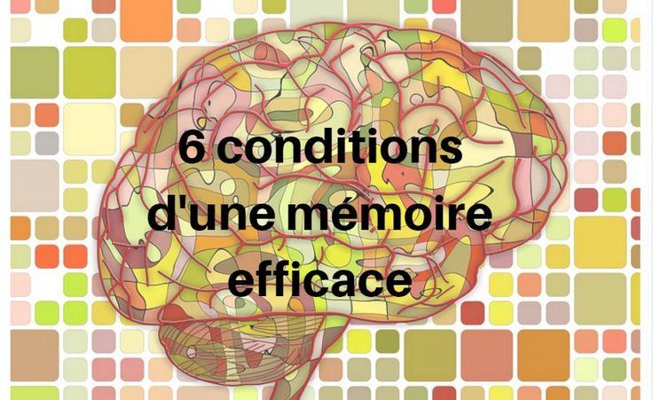 6 conditions d'une bonne mémoire pour réviser efficacement