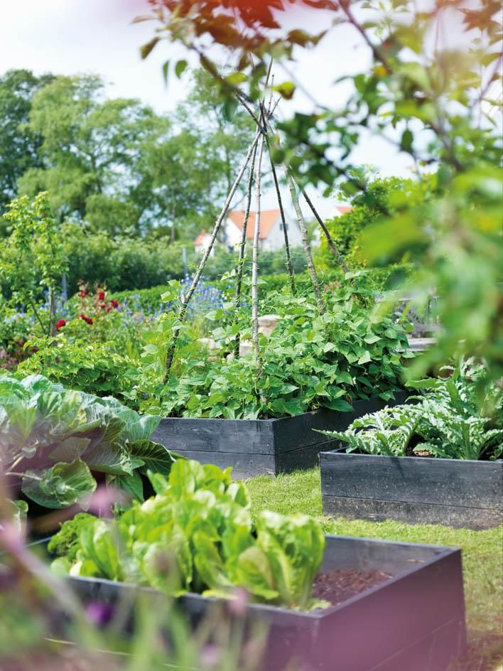 Robert tycker att det är enklare att lyckas med grönsaksodling i pallkragar. Det är lättare att få växterna att må bra genom att han kan kontrollera mängden gödning och vatten bättre. I odlingsbäddarna växer kronärtskocka, grönkål och gröna bönor sida vid sida med potatis, morötter, spetskål, vitlök, rödbetor och olika sorters lök. I rabatterna runtom sprider kryddörterna härliga dofter.