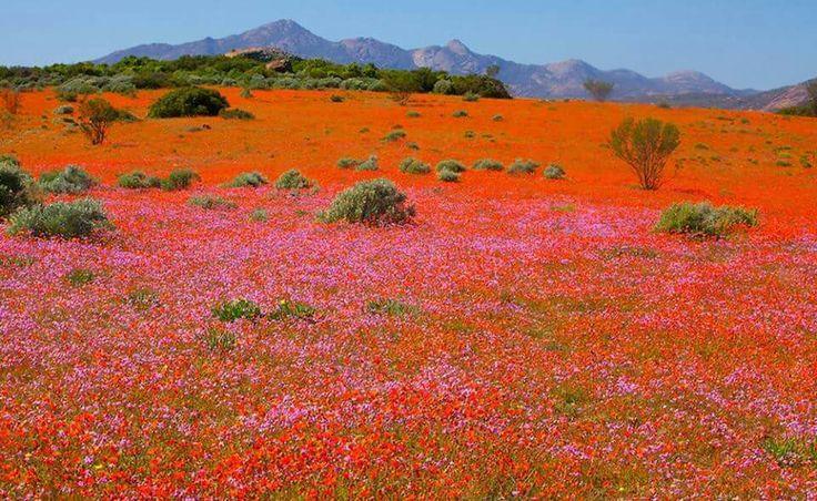 Springbok, Northwrn Cape