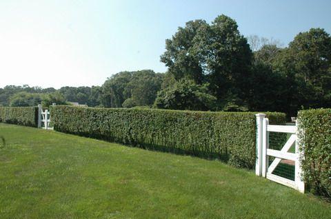 hedge + gates