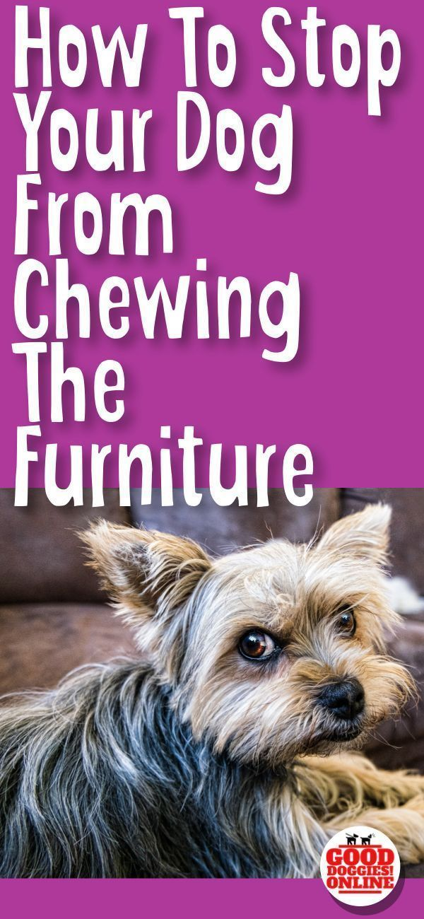 Easy Ways On How To Stop A Dog From Chewing On Furniture Stop