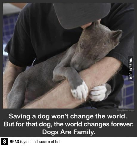 80% of shelter dogs are Pit Bulls.