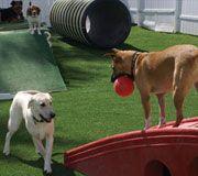 hund hinterhofhinterhof ideen - Ideen Fr Kleine Hinterhfe Mit Hunden