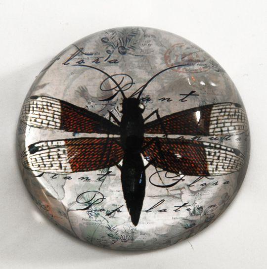 verrina libellula. diametro cm.7,5x3,5.