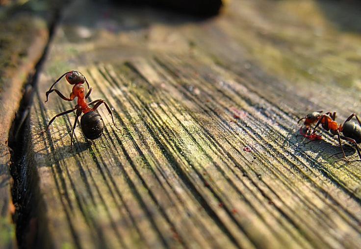 Die besten 25 ameisen vertreiben ideen auf pinterest k chen bodenreinigung k chenb den - Ameisen garten loswerden ...