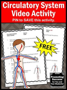 This FREE printable circulatory system worksheet and video will supplement your teaching human body systems unit for kids in 4th, 5th, 6th and 7th grade. These biology activities also work well for middle school and special education students. You may also purchase a foldable interactive notebook project for kids.
