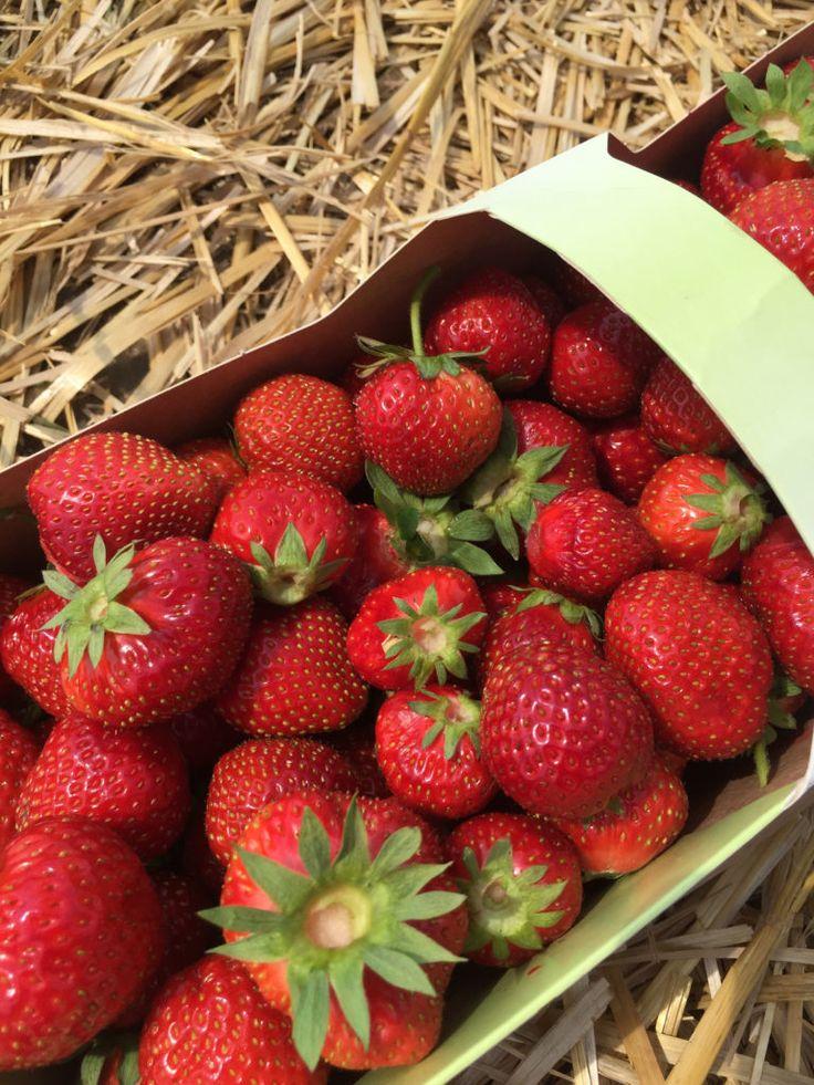 Erdbeeren selber pflücken – MAMALICIOUS BLOG