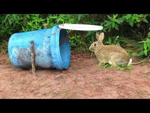 Amazing Quick Rabbit Trap Using Buckets - How To Make Rabbit Trap & Plastic Buckets Work 100% - YouTube