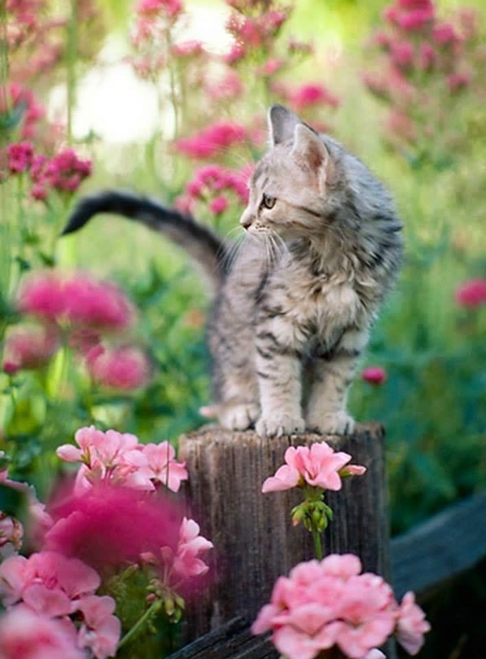 Kitten and spring flowers