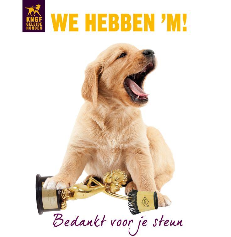 Yes! Onze commercial 'buddyhond' heeft de Gouden Loeki gewonnen!