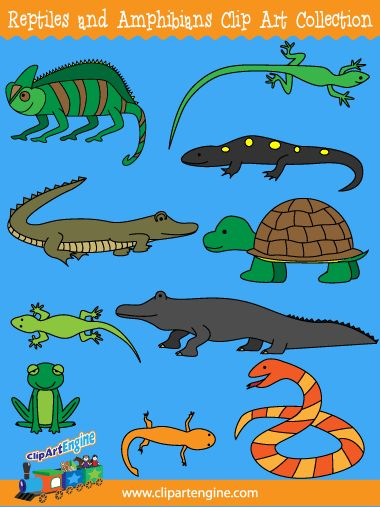 Reptiles And Amphibians Clipart