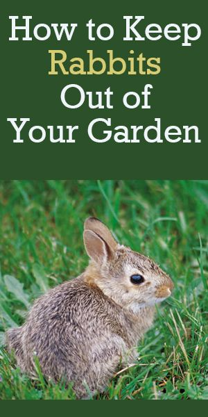 Image Result For How To Keep Rabbits Out Of My Flower Garden