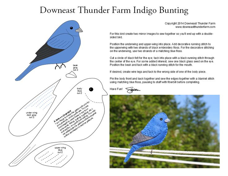 A Brilliant Indigo Bunting | Downeast Thunder Farm