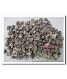 Nerita Communis 100 gr of 2 kg