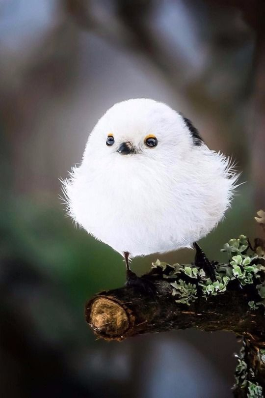 315 best Beautiful birds images on Pinterest | Beautiful birds ...