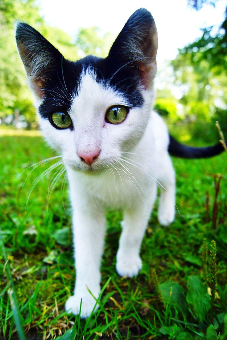 #cat #green #nature