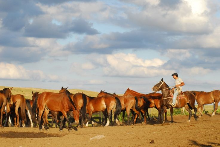 If you're a horse rider, you can't go past riding at an authentic estancia in Argentina. www.globetrotting.com.au