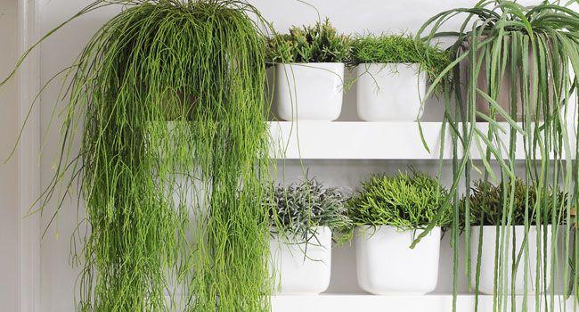 Une plante suffit parfois pour cr er toute une ambiance - Plante pour cuisine ...