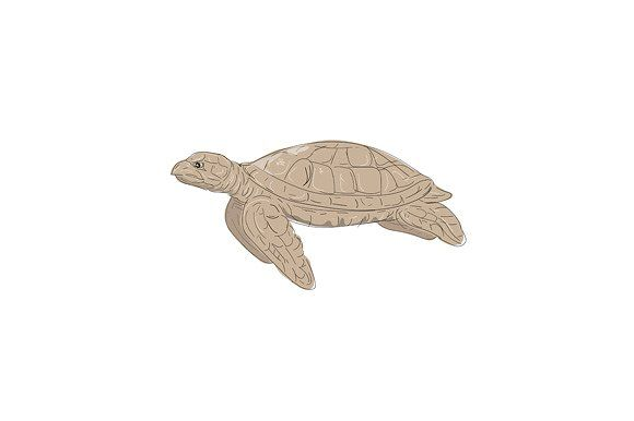 Hawksbill Sea Turtle Side Drawing by patrimonio on @creativemarket. Illustration of a Hawksbill Sea Turtle swimming viewed from Side done in hand sketch Drawing style. #illustration #HawksbillSeaTurtle