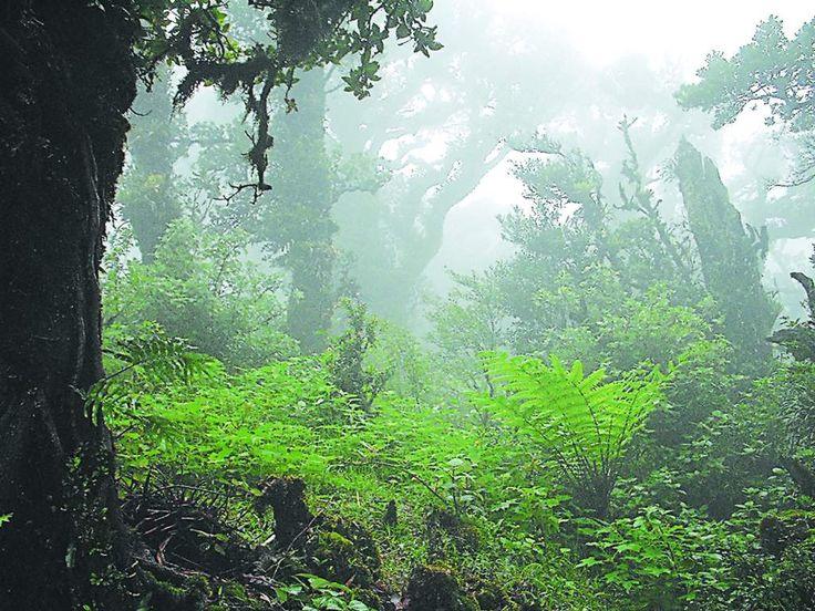 Honduras podría tener en el sur otro Patrimonio Mundial - Diario El Heraldo   En la Biósfera de San Marcos de Colón predomina el clima de bosque nublado.