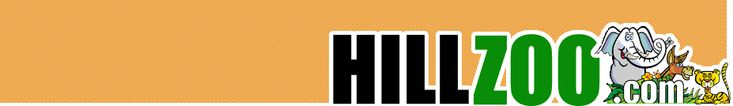 HillZoo.com: Internship and job listings On and Off the Hill