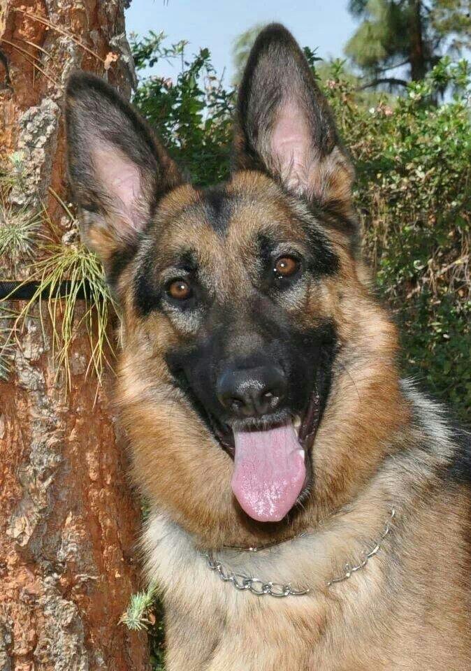 Reg Tracy Black Dog