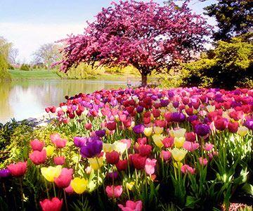 Chicago Botanic Garden  www.perugiaflowershow.com