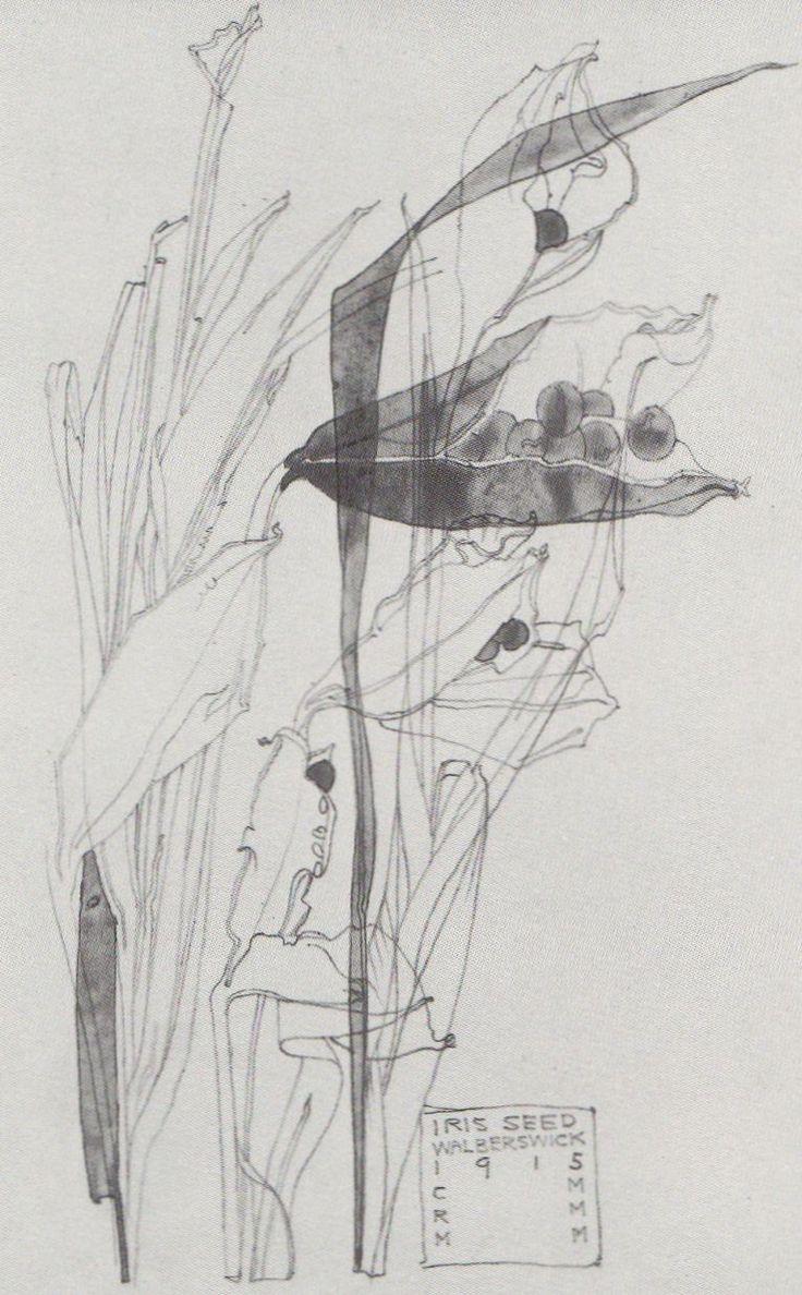 Plant Study ▫ Iris Seed / Walberswick by Charles Rennie Mackintosh (CRM) in…