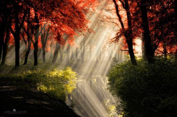 Forest photography by Diemen, Netherlands based photographer Lars van de Goor.
