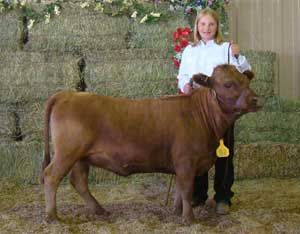 """Irish native Dexter cows are best raised as a family cow instead of part of a large herd, and breeders should also be aware of """"dwarf factor"""" genetics."""