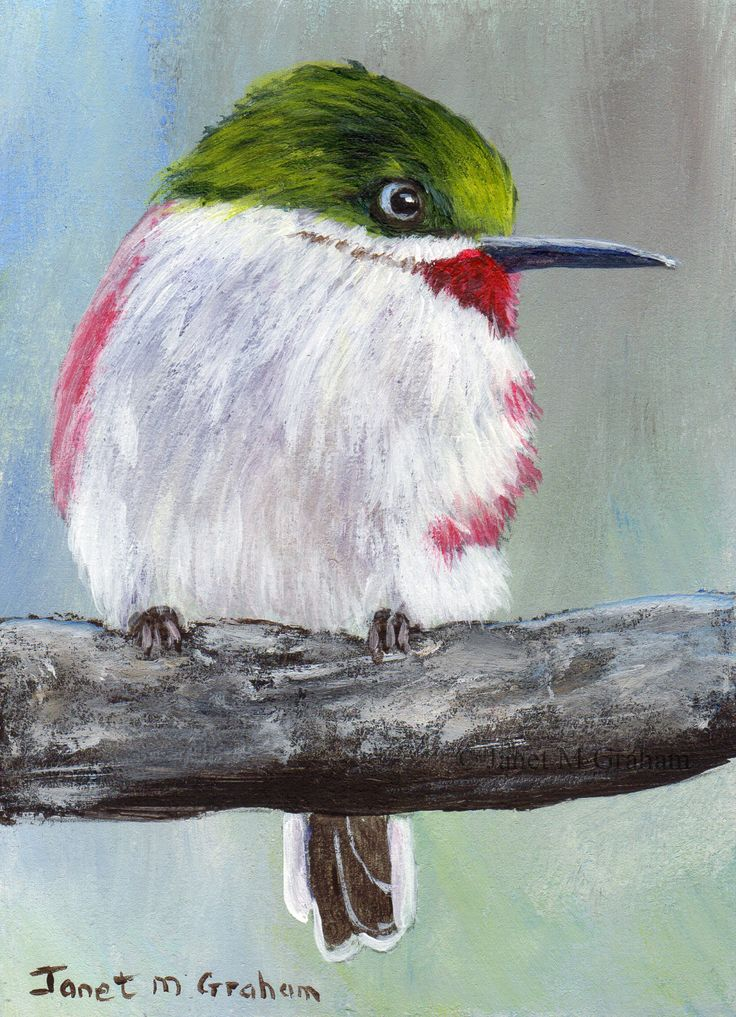 Narrow Billed Tody ACEO / Bird / Wildlife / Original Acrylic ACEO painting by Australian Artist Janet M Graham by ArtDownUnder on Etsy