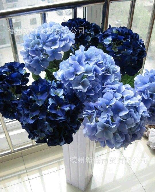 Blue hydrangeas cyndy wedding pinterest hydrangea