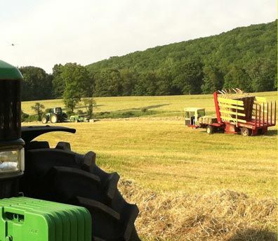 Hay Bales For Sale | Alfalfa Hay For Sale | Straw Bales For Sale