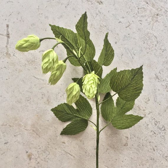 This vine of 5 hops and several leaves is highly detailed and realistic. Beautiful on its own or in an arrangement, they are sure to add an elegant feel to your home decor, at your wedding, or anywhere you care to enjoy it. Made with extra-fine German crepe paper to accentuate the organic look, this stem of greenery will never wilt or die. Each hops vine is on an 18 wire stem that can be cut or bent to fit in any vase or beer bottle you desire.  The price of shipping is based on the number…