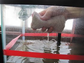 A Little Wife's Happy Life: How to Clean a Turtle Tank
