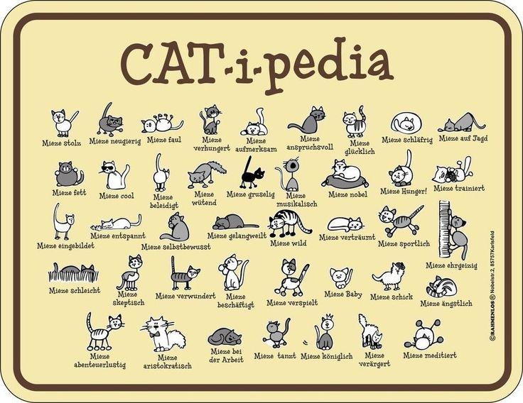 Blechschild Schild Katze Cat verstehen Katzenlexikon - CAT - i - pedia - TOP   eBay