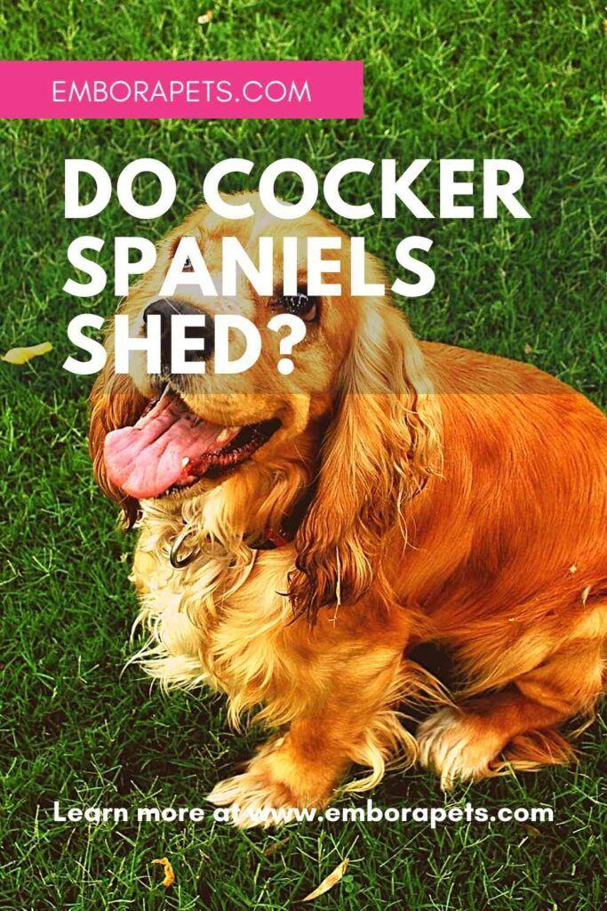 Do Cocker Spaniels Shed Embora Pets In 2020 Cocker Spaniel Spaniel Cocker Spaniel Puppies