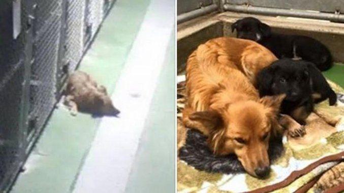 Cane scappa dalla gabbia del canile per consolare i cuccioli spaventati