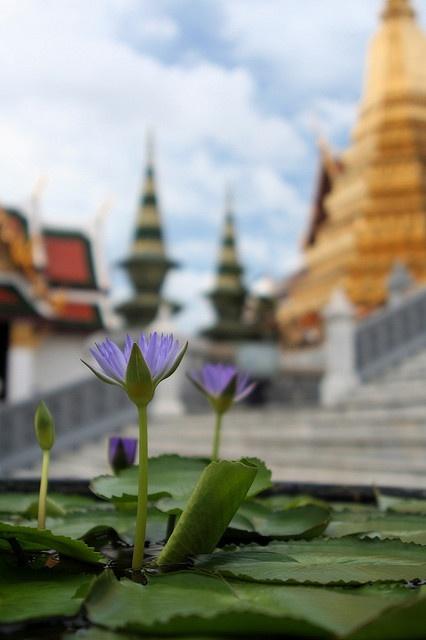 Lotus by randomix, via Flickr - Grand Palace, Bangkok, Thailand
