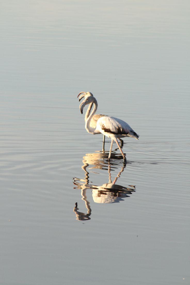 Bird watching Ria Formosa - Quinta do Lago