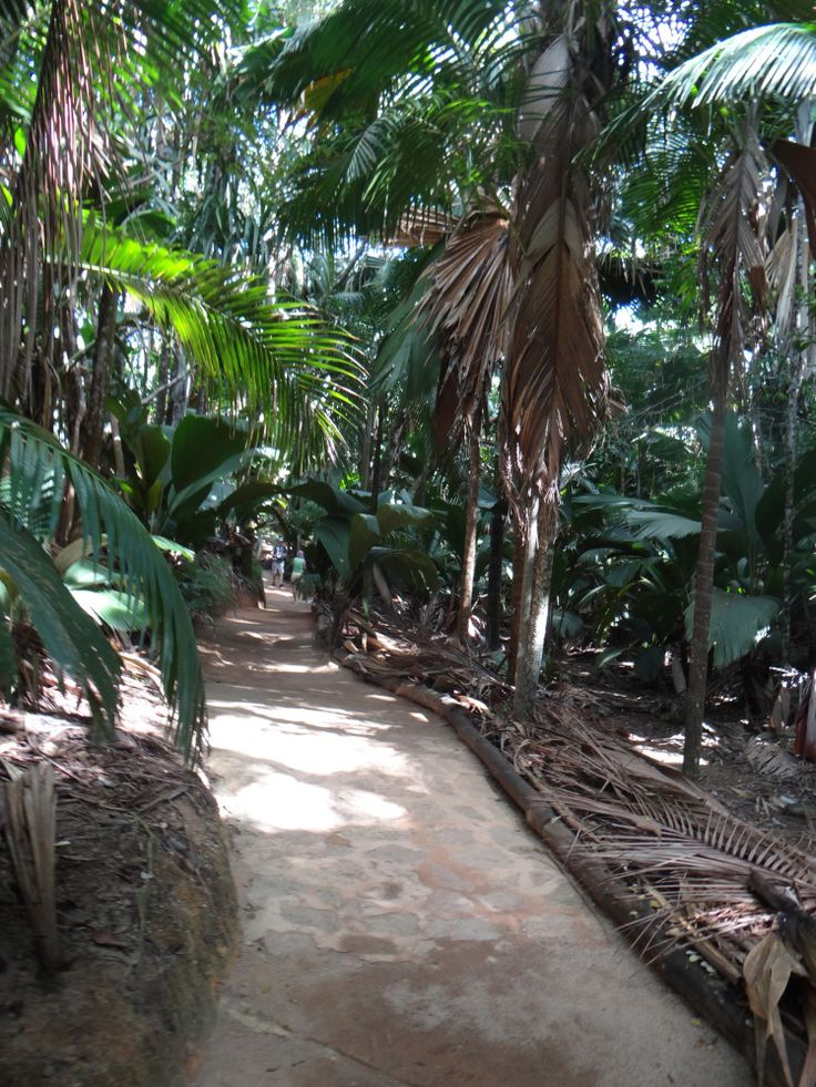 Nationalpark Vallèe de Mai - die größten Palmen der Welt - Seychellen http://vakantio.de/post/seychellen-reisebericht-vom-paradies-auf-erden-or-vakantio