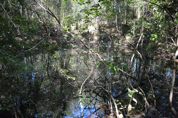 127 Best Images About Wakulla County Florida On Pinterest