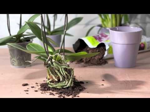 más de 25 bellas ideas sobre como trasplantar orquideas en