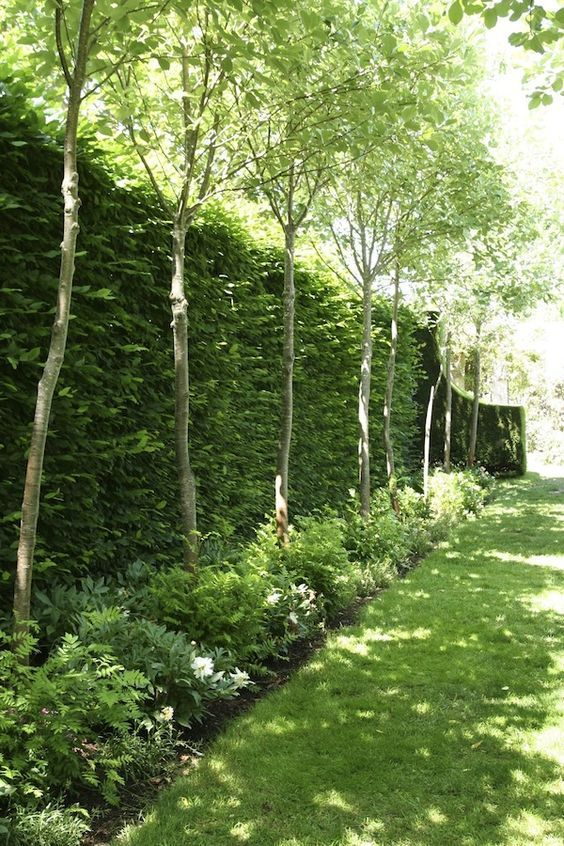 I love the look of this hedge and tree mixture for privacy Red Cow Farm garden   GardenDrum: