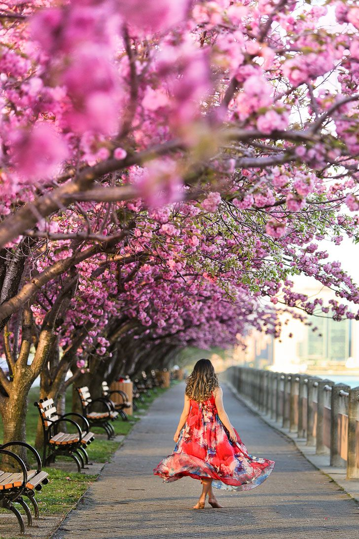 Best Places To See Cherry Blossoms In Nyc Places To See New York Travel Nyc Tourist Attractions